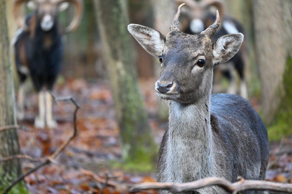 Zvěř v lese