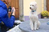 Fotografování psů