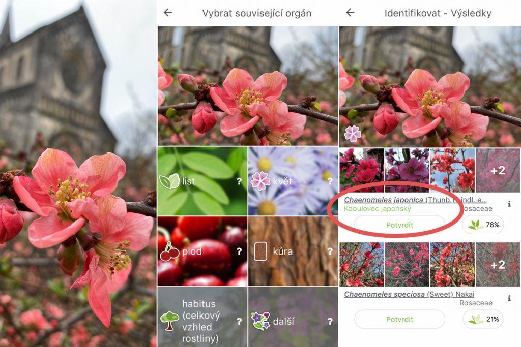 Aplikace PlantNet