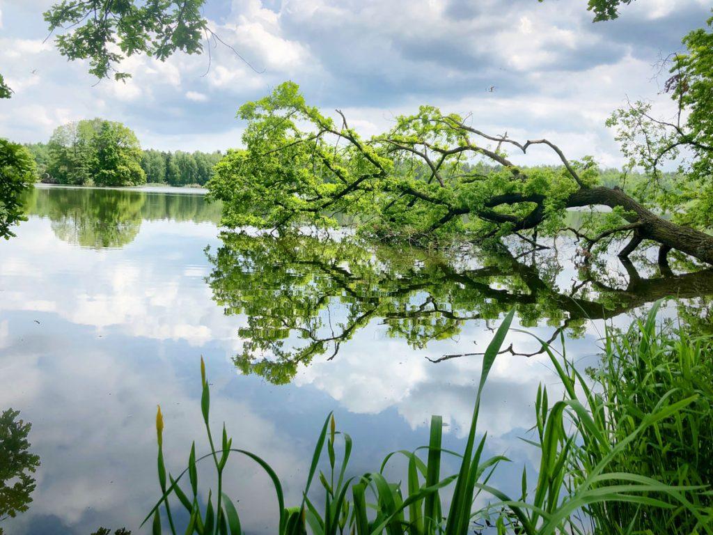 rybník Třeboňsko